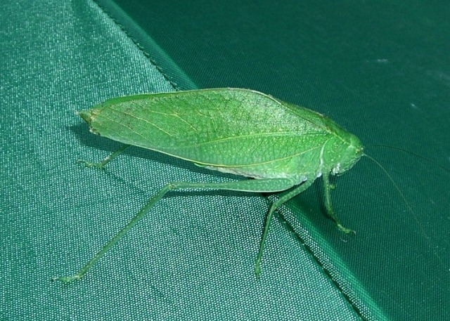 Katydid on matching umbrella