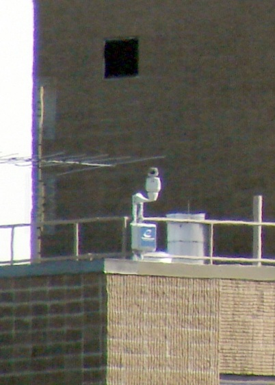 Walkway Webcam on Railing