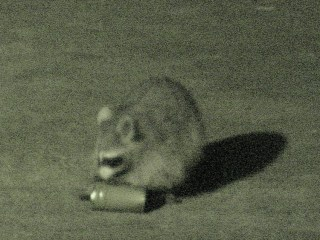 Raccoon vs cans - 6