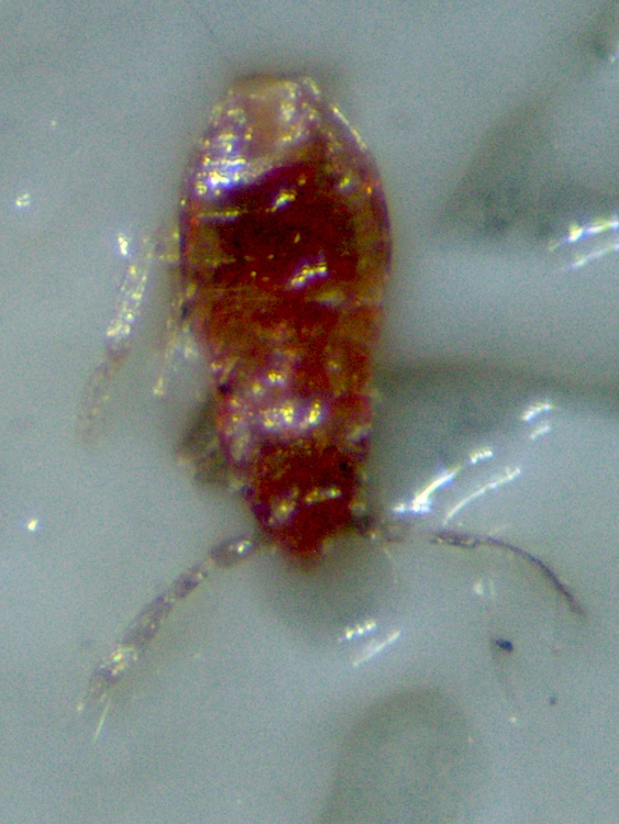 Bed Bugs: Dying on Planet Sticky | The Smell of Molten ...