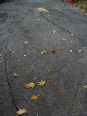 Oil trails on driveway