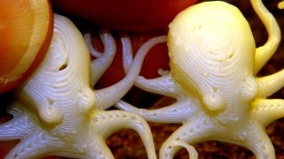 Octopodes - SD Card variations