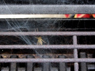 Spider in propane grill