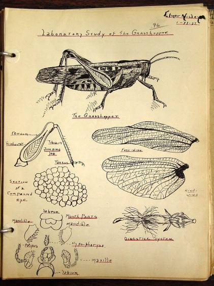 Laboratory Study of the Grasshopper