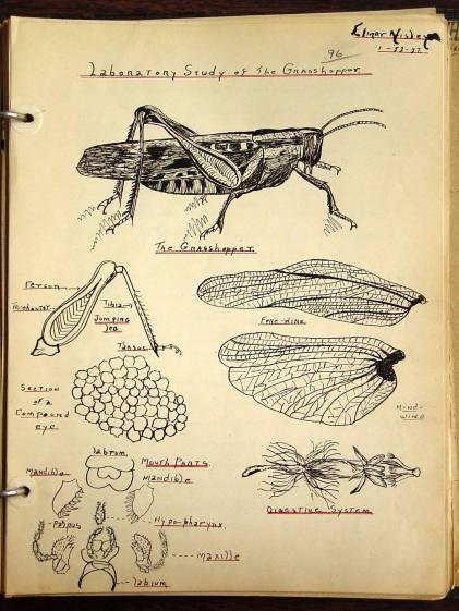 Laboratory Study of the Grasshopper