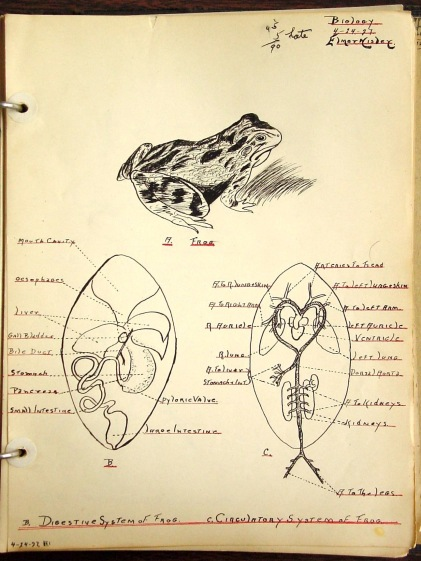 Laboratory Study of the Frog