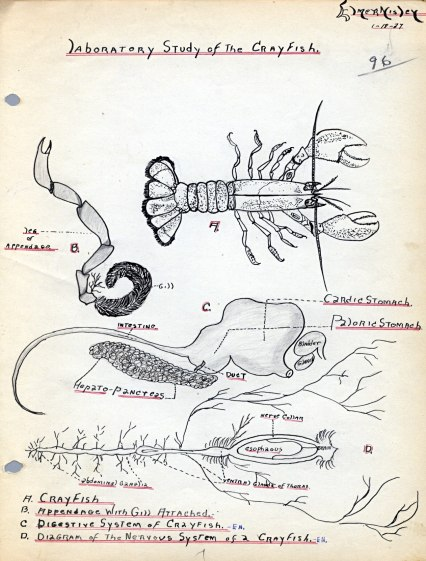 Laboratory Study of the Crayfish