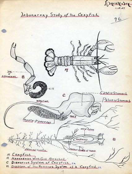 Laboratory Study of the Crayfish