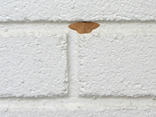 Moth - on painted brick wall