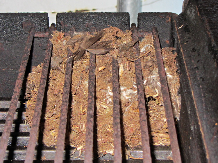 Mouse nest in grill