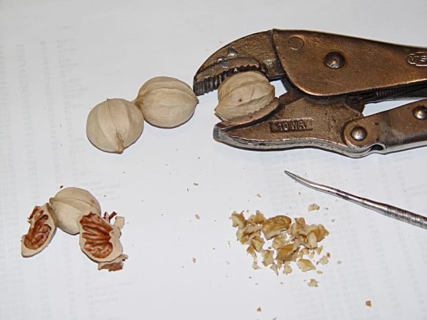 Cracking nickory nuts with a Vise-Grip