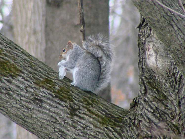 Squirrel with ice - 2