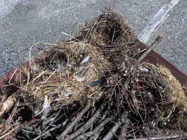 Bird box nests