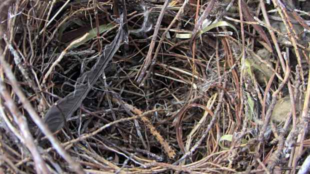 Bird nest with plastic strand