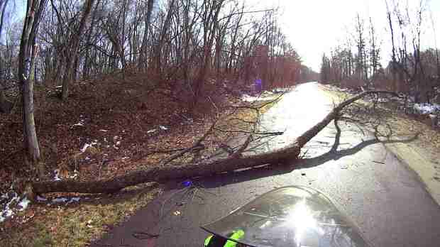 DCRT - fallen tree