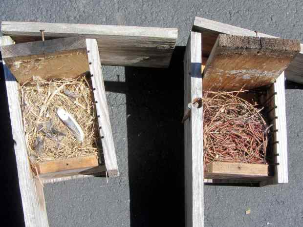 Bird box cleanout - old nests
