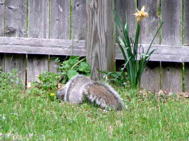 Mother squirrel and pup - 1