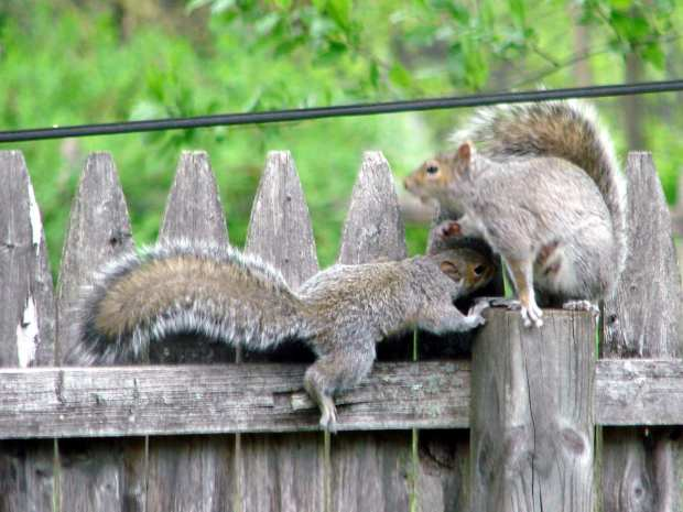 Mother squirrel and pup - 2