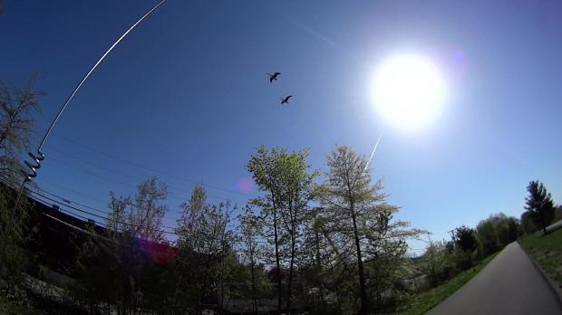 Canada Geese over DCRT