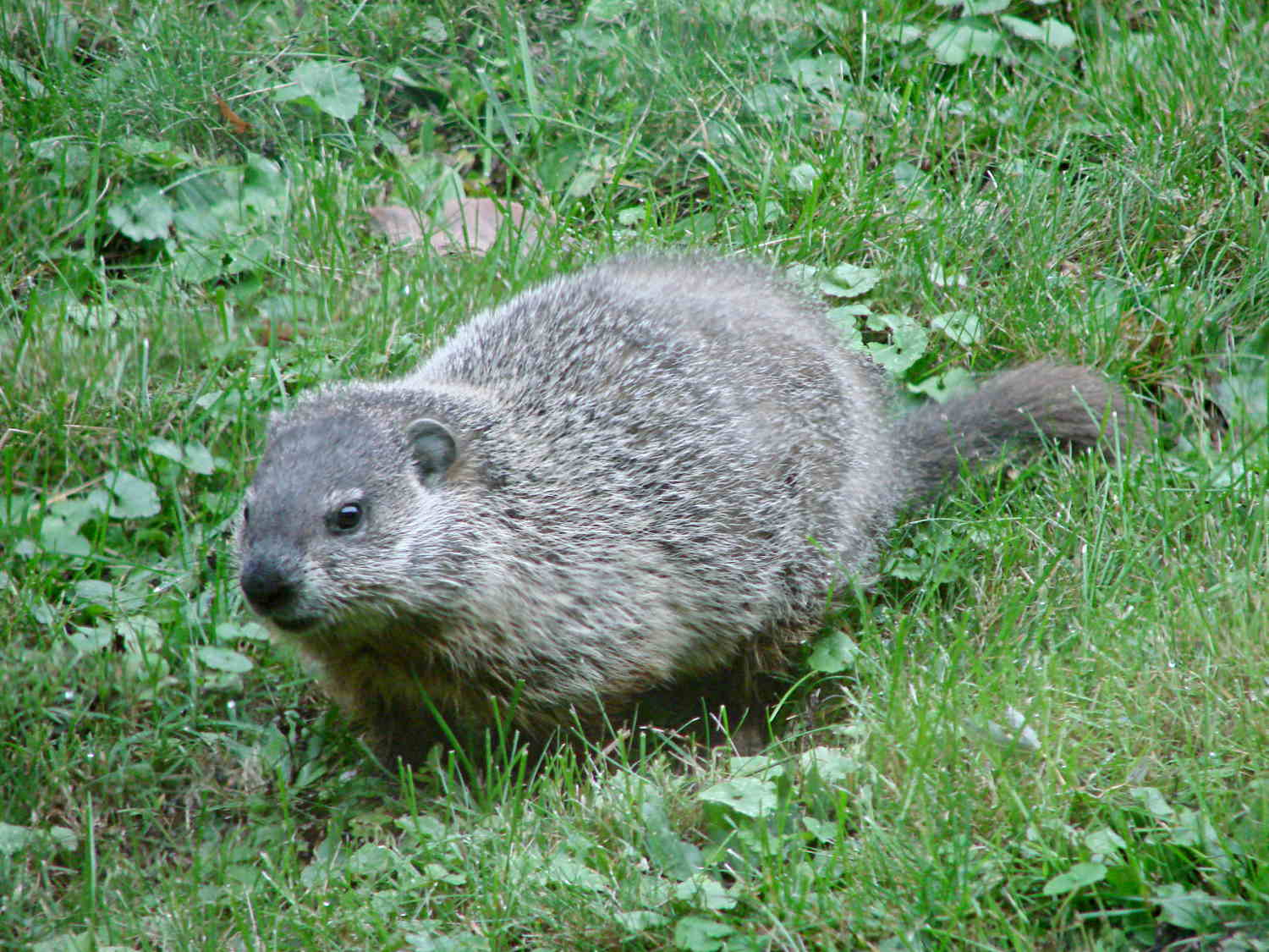 groundhog search results the smell of molten projects in the