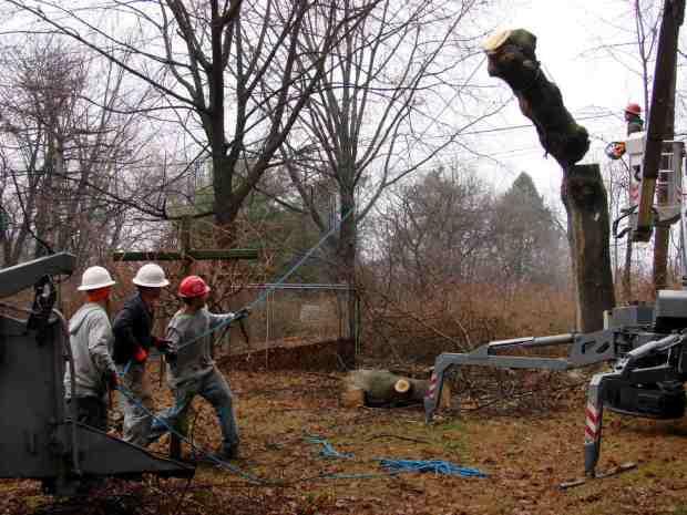 Treecutting - trunk takedown