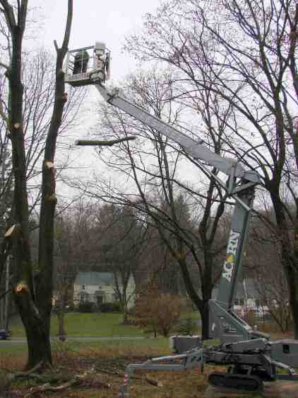 Treecutting - 76 ft manlift
