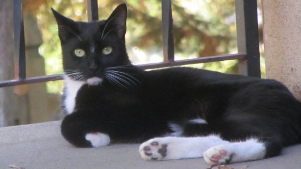 Cat on patio