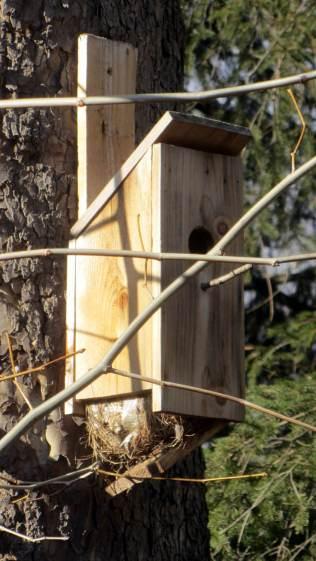 Self-cleaning bird nest box