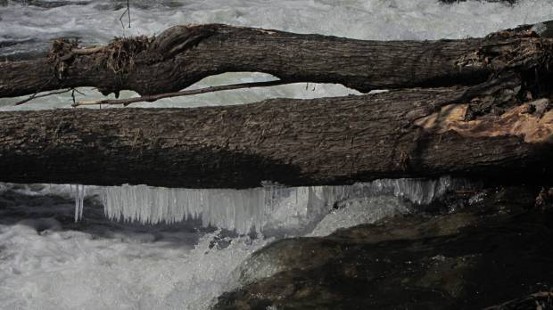 Red Oaks Mill Dam - icicles on deadwood
