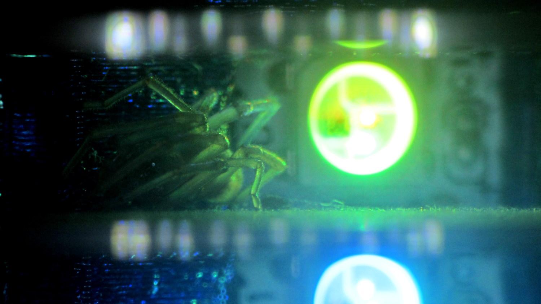 Hard drive platter mood light failed led debugging for Enhance mood lighting