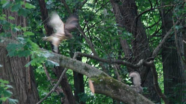 New Hawks - vs New Squirrel