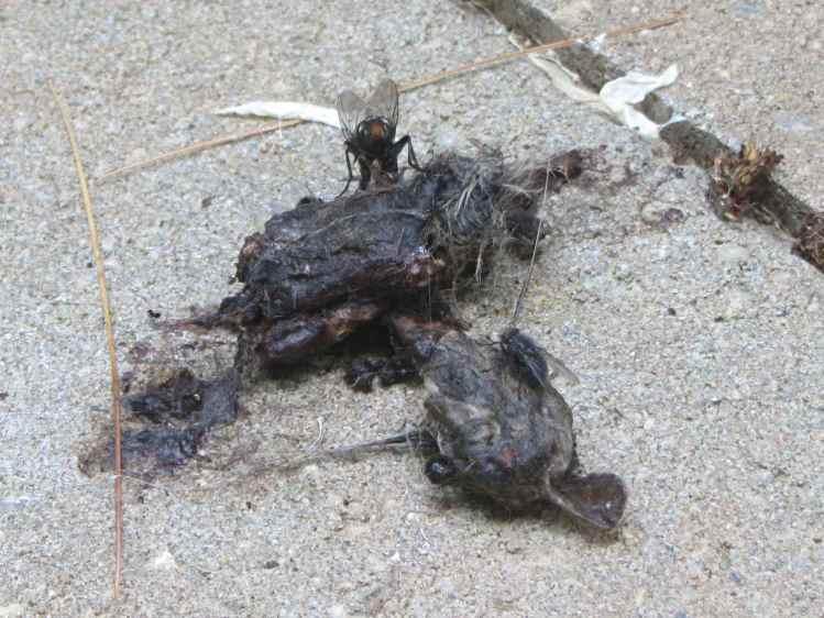 Raptor vs. Rodent gibbage