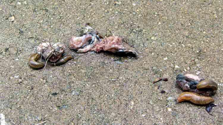 Raptor vs. Rodent gibbage - cleanup squad