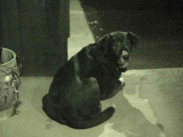 Dog on patio