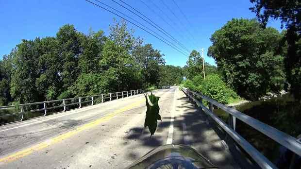 Jackson Rd - Leaf Impact - 2016-06-30 - 0509