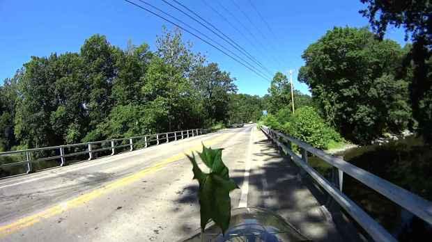 Jackson Rd - Leaf Impact - 2016-06-30 - 0510