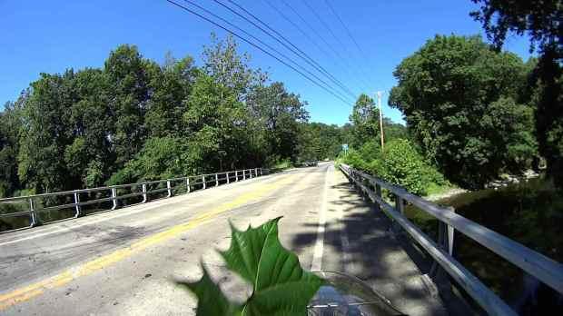 Jackson Rd - Leaf Impact - 2016-06-30 - 0511