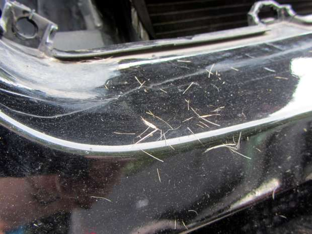 Deer-smashed car - hair detail