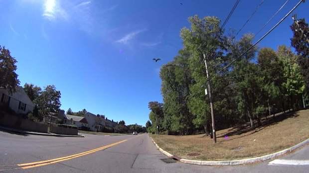 Vulture - 2016-09-25 - Hooker Ave