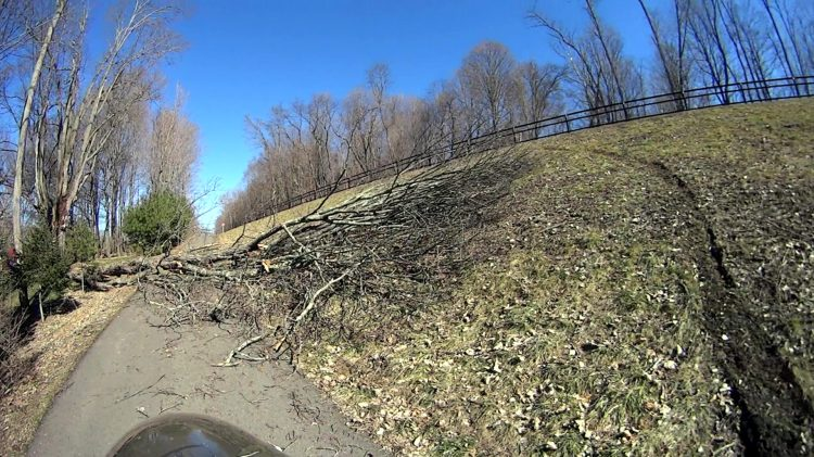 DCRT - Maloney Rd - tree down - 2017-02-20