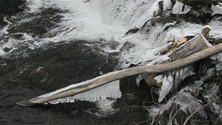 Red Oaks Mill Dam - ice coated branch