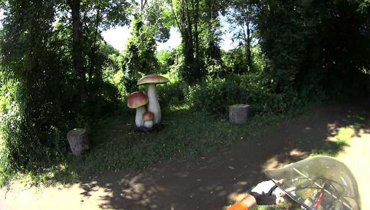 Vassar Farm Mushrooms