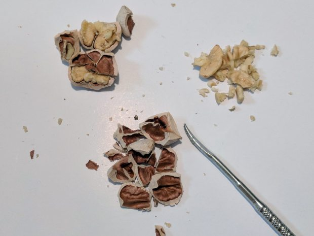 Hickory Nuts - cracked