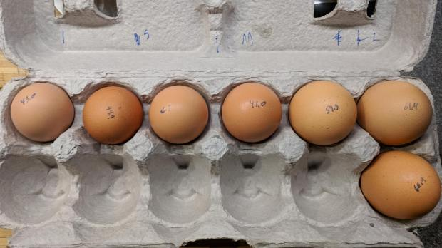 Brown egg size distribution