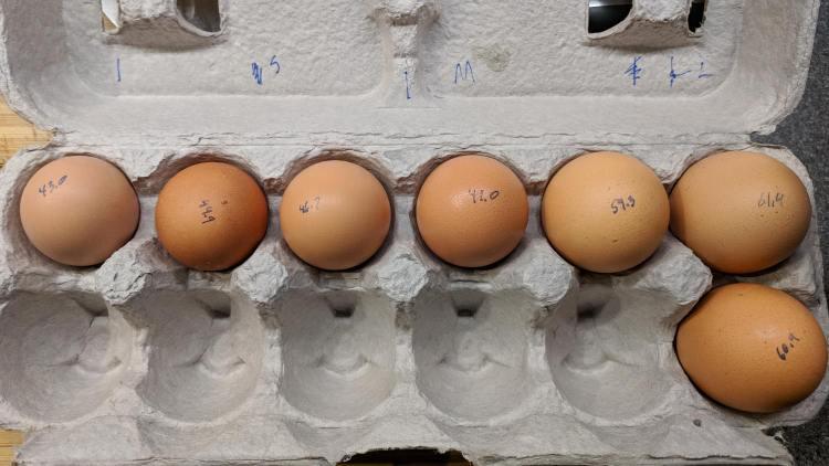 Brown egg size distribution
