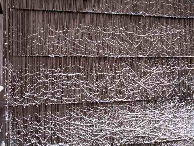 Snow-dusted spider silk