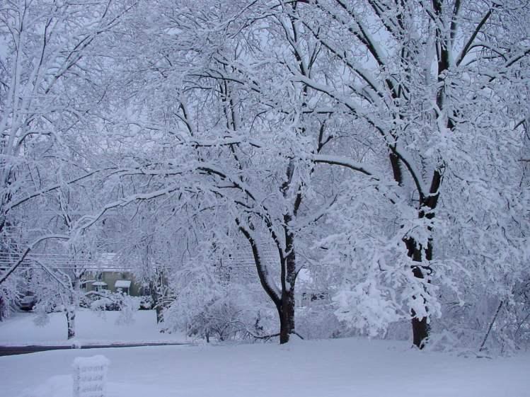 Snowfall - Front yard - day