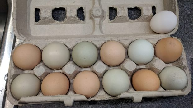 Multicolored chicken eggs