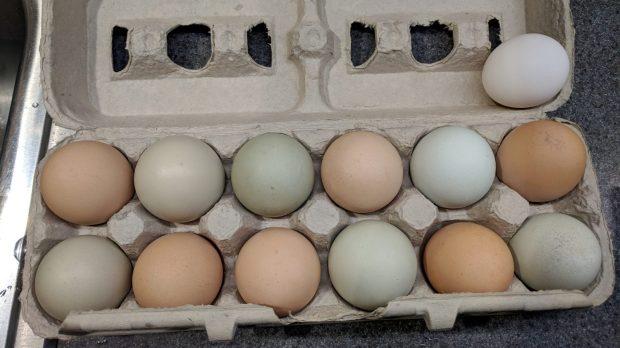 Multicolored chicken eggs