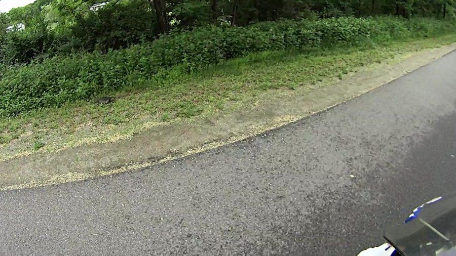 Rail Trail Turtle - 2018-06-04